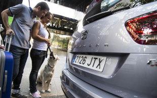 Pies w samochodzie. Jak zaplanować podróż z czworonogiem?