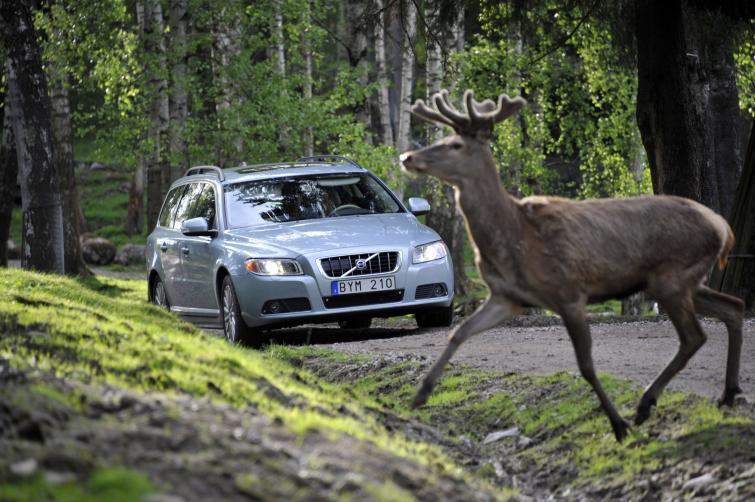 Samochód sam zahamuje przed zwierzęciem na drodze