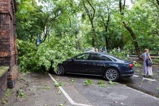 Drzewo zniszczyło auto. Kto ponosi odpowiedzialność za szkodę? Czy dostaniemy odszkodowanie?