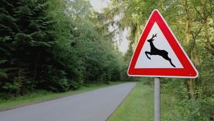 Zwierzęta na drodze. Jak się zachować i uniknąć wypadku?