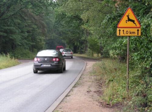 Fot. Maciej Pobocha: W przypadku szkody spowodowanej przez zwierzęta dziko żyjące, właściciel samochodu ma szanse uzyskania odszkodowania.