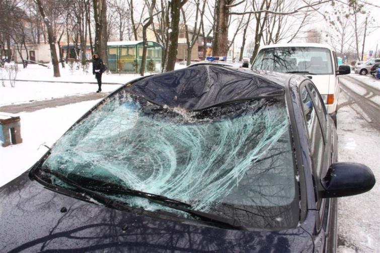 Za auta uszkodzone przez dzikie zwierzęta płaci tylko autocasco