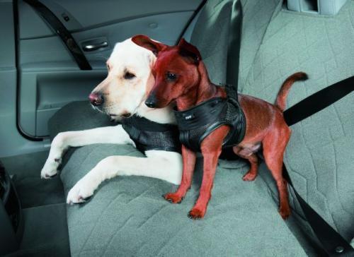 Fot. BMW: Sposób przewożenia zwierząt w samochodzie nie jest w Polsce uregulowany przepisami. W sklepach są dostępne specjalne szelki dla psów.